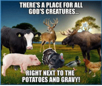 Memes, Potato, and 🤖: THERE'S A PLACE FOR ALL  GOD'S CREATURES..  RIGHT NEXT TO THE  POTATOES AND GRAVY!