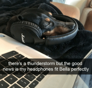 News, Good, and Headphones: there's a thunderstorm but the good  news is my headphones fit Bella perfectly ily bella