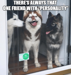 Animals, Funny, and Memes: THERES ALWAYS THAT  ONE FRIEND WITH PERSONALITY  UARDIAN 50+ Funny Husky Memes That Will Keep You Laughing For Hours #husky #huskymemes #dogmemes #memes #funnymemes - Lovely Animals World