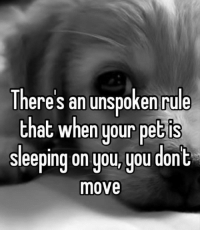 Sleeping, Pet, and Move: Theres an unspoken rule  that when your pet is  sleeping on you,you dont  move <p>Important Unspoken Rule.</p>