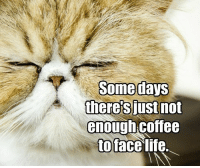 there's just not  enough coffee  toface life.
