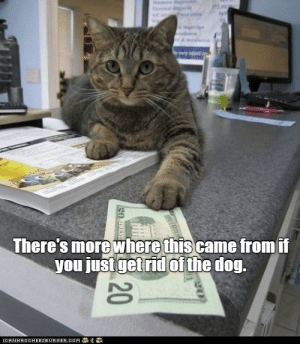 Cats, Cute, and Funny: There's more where thiscame fromii  you just getrid of the dog Every week we collect the highest voted cat memes that our users created for ICanHas Cheezburger's LOLCats.#cats # funny cats # cute cats # cat memes # funny memes # animal memmes # lol cats