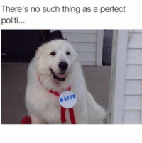 Politico, Thing, and Such: There's no such thing as a perfect  politi...  YOR <h2>No existe el político perfect&hellip;</h2><p>Igual no hace nada, pero tampoco roba nada.</p>