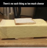 9gag, Memes, and Too Much: There's no such thing as too much cheese The kind of idiot sandwich I'd want.⠀ 📸 fitzycfc | TW⠀ -⠀ cheese sandwich hellskitchen 9gag