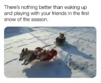 Friends, Memes, and Snow: There's nothing better than waking up  and playing with your friends in the first  snow of the season. This might be the funniest thing I've ever seen 😂 | @cuteandfuzzybunch