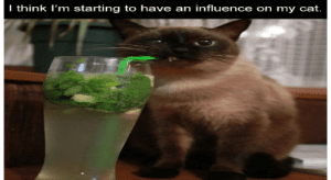 There's nothing like some good laughs on a Sunday morning. So pour your morning cup and scroll through these hot memes. #catmemes #funnymemes #animalmemes #funnyanimals #dogmemes: There's nothing like some good laughs on a Sunday morning. So pour your morning cup and scroll through these hot memes. #catmemes #funnymemes #animalmemes #funnyanimals #dogmemes