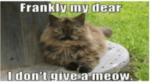 There's nothing like some good laughs on a Sunday morning.  So pour your morning cup and scroll through these hot memes. #animals #funnyanimals #animalmemes #catmemes #dogmemes: There's nothing like some good laughs on a Sunday morning.  So pour your morning cup and scroll through these hot memes. #animals #funnyanimals #animalmemes #catmemes #dogmemes