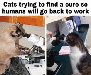 There's nothing like some good laughs on a Sunday morning. #cats #catmemes #funnycats #funnymemes #animalmemes: There's nothing like some good laughs on a Sunday morning. #cats #catmemes #funnycats #funnymemes #animalmemes