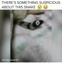 Lol, Twitter, and Snake: THERE'S SOMETHING SUSPICIOUS  ABOUT THIS SNAKE  TWITTER: @khtt8765 LOL - follow @buzzfeedanimals for more cuteness 😍