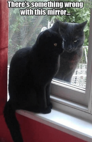 "Cat outside: ""DIE!"" Cat inside: ""He's not looking at me. He's not looking at me."" (Their faces!!! :D) #CatFace: There's something wrong  with this mirror Cat outside: ""DIE!"" Cat inside: ""He's not looking at me. He's not looking at me."" (Their faces!!! :D) #CatFace"