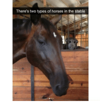 Horses, Stable, and  Two: There's two types of horses in the stable