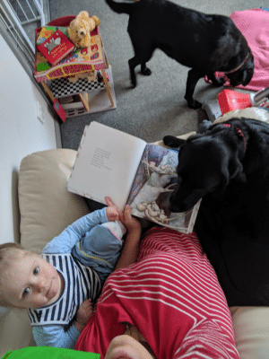 World Wrestling Entertainment, Thes, and Dog: The's nd  T  apy RE STA  h Aked  d s  hes shew o  wwe a Our new foster dog(who is the sister of our first dog) has finally warmed to the toddler, now she's even snuggling us at storytime. So lucky!