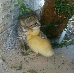 thesassyducks:Best friends for ever 💗🐥: thesassyducks:Best friends for ever 💗🐥