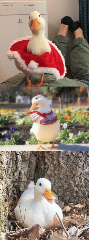 thesassyducks:  Ducks are just wonderful: thesassyducks:  Ducks are just wonderful