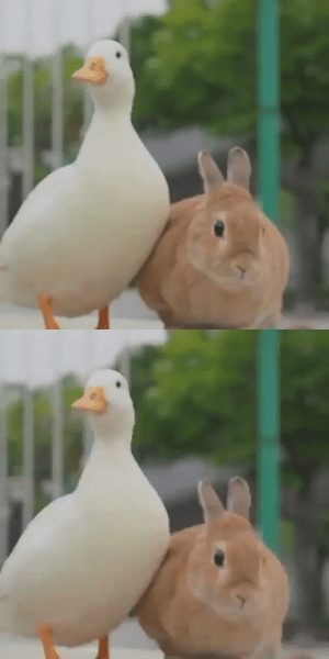 thesassyducks:  How cute is this 🦆🐰(via) & (via): thesassyducks:  How cute is this 🦆🐰(via) & (via)