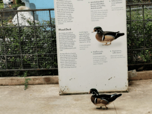 thesassyducks: This duck passing by its own sign via r/mildlyinteresting : thesassyducks: This duck passing by its own sign via r/mildlyinteresting