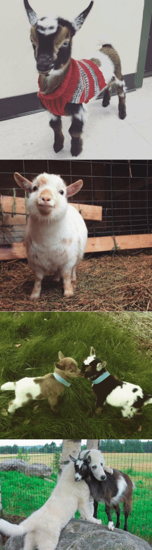 thesassygoats:WE WILL OVERCOME: thesassygoats:WE WILL OVERCOME