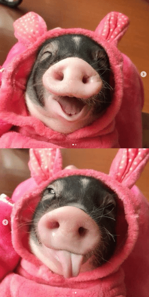 thesassypigs:  So cuteeeee(Source): thesassypigs:  So cuteeeee(Source)