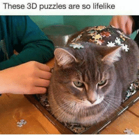 Someone's about to die. And it ain't kitty (@funpawcare) dogtraining puppylove dogwalking dogpark doglover puppies puppy pupper puppers puppiesofinstagram dogstagram perro adopt rescue volunteer dogs dog vegan petstagram adorable funnycat catsrule cat cats meow kitten kitty Catsofinstagram gato gatos: These 3D puzzles are so lifelike Someone's about to die. And it ain't kitty (@funpawcare) dogtraining puppylove dogwalking dogpark doglover puppies puppy pupper puppers puppiesofinstagram dogstagram perro adopt rescue volunteer dogs dog vegan petstagram adorable funnycat catsrule cat cats meow kitten kitty Catsofinstagram gato gatos