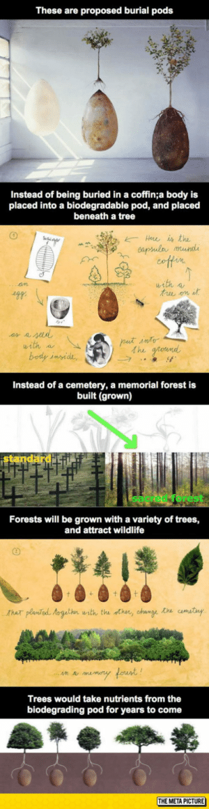 Club, Tumblr, and Blog: These are proposed burial pods  being buried in a coffi  placed into a biodegradable pod, and placed  beneath a tree  Instead  body is  Hee is the  eapsula mundi  with a  am  put into  the ground  with a  body inside,  Instead of a cemetery, a memorial forest is  built (grown)  istandard fi  Forests will be grown with a variety of trees,  and attract wildlife  + t t  Thar planted toguthn with the thn, change the camitiny  n memry forunt!  Trees would take nutrients from the  biodegrading pod for years to come  THE META PICTURE laughoutloud-club:  Burial Pods, Why Aren't We Funding This?