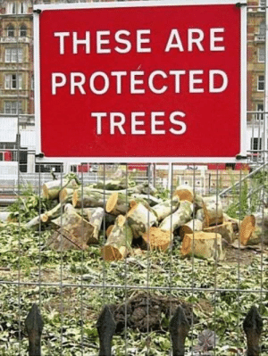 That word …. I don't think that word means what you think it means: THESE ARE  PROTECTED  TREES That word …. I don't think that word means what you think it means