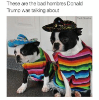 I don't wanna deport them: These are the bad hombres Donald  Trump was talking about  Tank Sinatra I don't wanna deport them