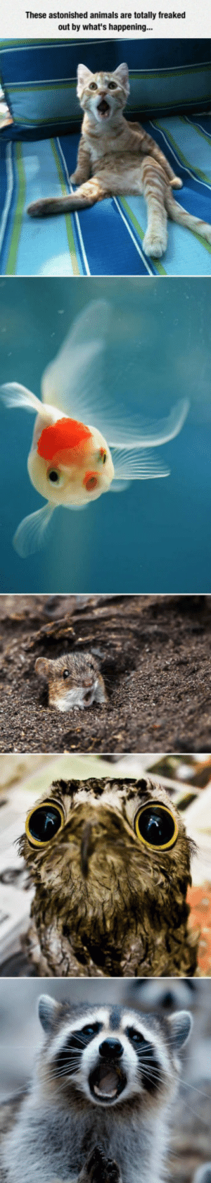 Animals, Tumblr, and Blog: These astonished animals are totally freaked  out by what's happening... awesomesthesia:  What Did They See?