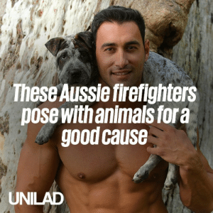 These Australian firefighters pose with animals for a charity calendar every year, and they've raised millions in the process...  😲🔥  Australian Firefighters Calendar: These Aussie firefighters  pose with animals fora  good cause  UNILAD These Australian firefighters pose with animals for a charity calendar every year, and they've raised millions in the process...  😲🔥  Australian Firefighters Calendar