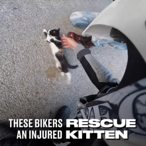 Dank, 🤖, and Kitten: THESE BIKERS RESCUE  AN INJURED KITTEN The kitten was clearly injured and struggling to walk, until bikers arrived and sprung into action... 👏🐱