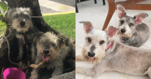 Being Alone, Cute, and Reddit: These brothers were found walking together down a highway in Puerto Rico, scruffy and abandoned. We weren't really looking to get a dog (let alone two), but after spending just a few minutes with these cute faces, how could we not keep them forever? Reddit, meet Mario and Luigi!