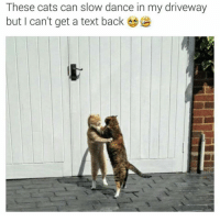 Slow Dance: These cats can slow dance in my driveway  but can't get a text back
