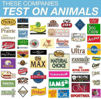 beneful: THESE COMPANIES  TEST ON ANIMALS  PRIMAL  Deli  Fresh JOYBLUERUTIN  voDerm  DOG  CHOW  Earthborn  Prairie Naiuril  Taste of  the Wild  nr  Beneful  ALPO  FORNIA  OARTEMIS  Pedigree  dp Ultra  PROPIAN  NTRAL ANA  NATURAL  RAND  ultt  Migho  PI  Cesar  3E  ROYAL CANIN  BRAVO  SCIENCE DIET  PRO PAC  AMS  INNOVA  EVO  ICy  east  THE ANGESTRAL  HE ANCESTRAL  ONE  PURINA  PURINA  SPORTMX whisk