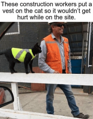 Not all heroes wear capes, some wear orange vests ♥️: These construction workers put  vest on the cat so it wouldn't get  hurt while on the site. Not all heroes wear capes, some wear orange vests ♥️