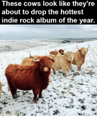 Memes, 🤖, and Looking: These cows look like they're  about to drop the hottest  indie rock album of the year.