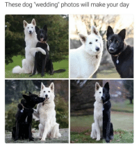 """Wedding: These dog """"wedding"""" photos will make your day"""