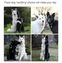 "Funny, Ted, and Wedding: These dog ""wedding photos will make your day This is great (@hilarious.ted)"