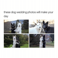 Dogs, Life, and Love: these dog wedding photos will make your  day when a dogs love life is better than yours