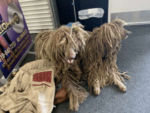These dogs are just missing a Jamaican flag and a joint: These dogs are just missing a Jamaican flag and a joint