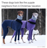 """""""I wasn't talking to you"""" (Turn on post notifications and like and comment within the first 30 minutes for a chance to win a gift card. I've been sending out Amazon gift cards but it can be whatever you want): These dogs look like the yuppie  neighbors from A Christmas Vacation  MADE WITH MOMUS """"I wasn't talking to you"""" (Turn on post notifications and like and comment within the first 30 minutes for a chance to win a gift card. I've been sending out Amazon gift cards but it can be whatever you want)"""
