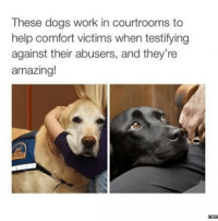Dogs, Funny, and Work: These dogs work in courtrooms to  help comfort victims when testifying  against their abusers, and they're  amazing!  merT This might be the best thing ever
