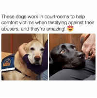 This is amazing. And so is @drsmashlove and the great memes he shares.: These dogs work in courtrooms to help  comfort victims when testifying against their  abusers, and they're amazing! This is amazing. And so is @drsmashlove and the great memes he shares.