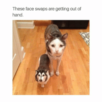 Fucking, Face Swap, and Fuck: These face swaps are getting out of  hand What the fuck