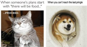 These food memes will sure make you hungry for more. Bon Appetite!#funnymemes #foodmemes #animalmemes #funnyanimals #catmemes #dogmemes: These food memes will sure make you hungry for more. Bon Appetite!#funnymemes #foodmemes #animalmemes #funnyanimals #catmemes #dogmemes