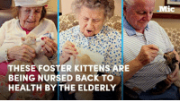 2016 sucks, so here are some adorable elders taking care of incredibly cute kittens.: THESE FOSTER KITTENS ARE  BEING NURSED BACK TO  HEALTH BY THE ELDERLY  Mic 2016 sucks, so here are some adorable elders taking care of incredibly cute kittens.