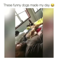 Dogs, Funny, and Day: These funny dogs made my day <p>Part 1<br/></p>
