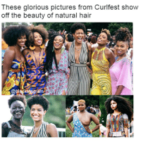 Memes, Ebony, and Hair: These glorious pictures from Curifest show  off the beauty of natural hair  @blackstagram Natural hair is my soft spot. @panafrican.roots blackexcellence blackpride blackandproud blackpower africanamerican melanin ebony panafrican blackcommunity problack brownskin naturalhair naturalhairdaily naturalhairstyles bighairdontcare