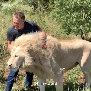 Dank, Lions, and White: These lucky tourists had a VERY rare encounter with a pride of White Lions 😲🦁