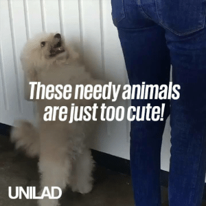 Actual proof that all animals have a needy side... 😂😍: These needy animals  are just too cute!  UNILAD Actual proof that all animals have a needy side... 😂😍