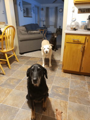 These old ladies waiting in line for treats: These old ladies waiting in line for treats