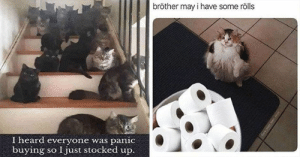 These past few days have been weird but luckily we can always rely on Caturday to deliver the smiles!#cats #funnycats 3catmemes #funnymemes #caturday: These past few days have been weird but luckily we can always rely on Caturday to deliver the smiles!#cats #funnycats 3catmemes #funnymemes #caturday